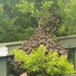 Example of a swarm